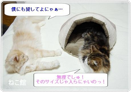 blog8_20121204130140.jpg