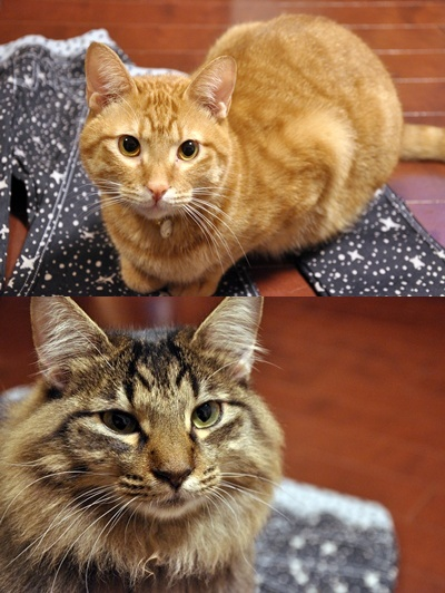 cats1_2013111100455845f.jpg