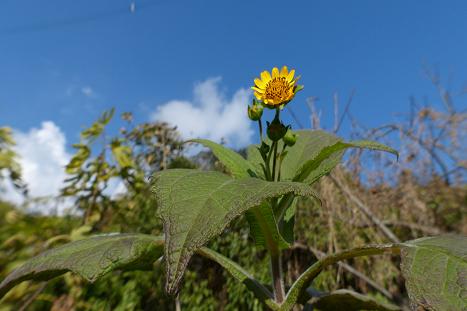 小さな花です♪