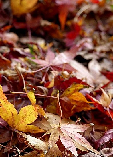落ち葉がいっぱいでした♪