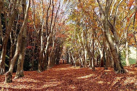 落ち葉の絨毯に♪