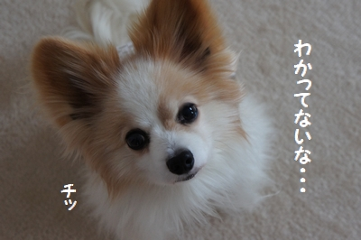 010_20120731182502.jpg