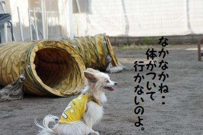 068_20120824141743.jpg