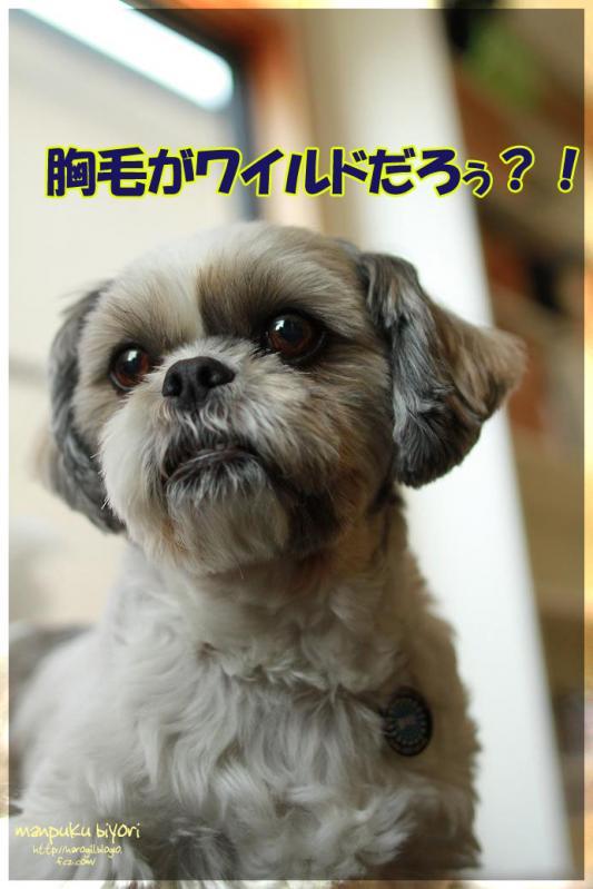 009_20120528133812.jpg
