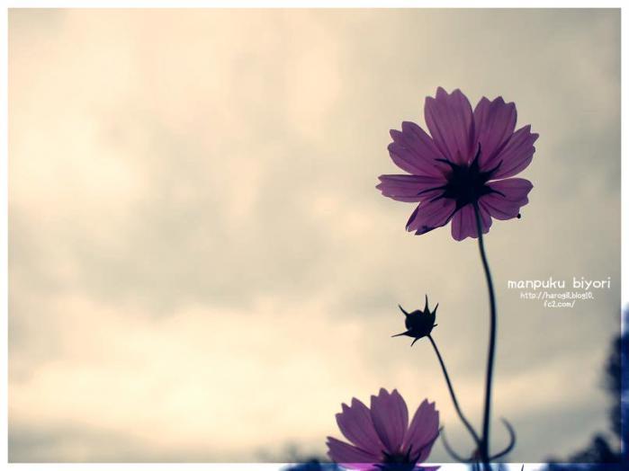 022_20121025160357.jpg