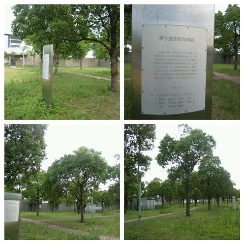 平成25年8月7日政令指定都市の森