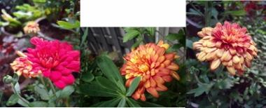 連結画像-1 (380x154)