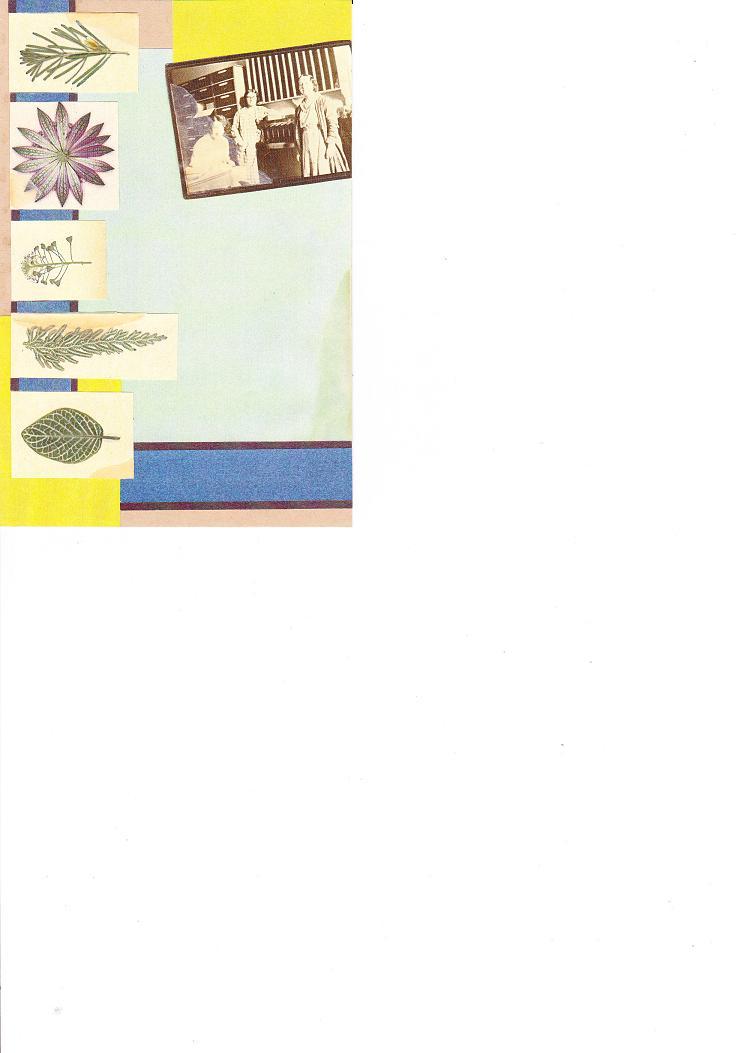 押し花素材集カード_0002
