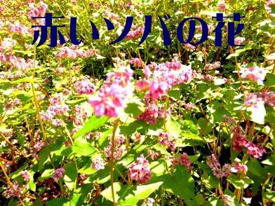 blog_1118_121918.jpg