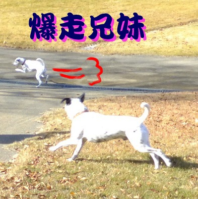blog_1125_100043(1).jpg