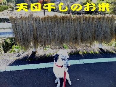 blog_1125_133302.jpg