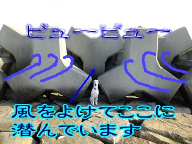 blog_1201_113251.jpg