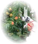 hanna peach3