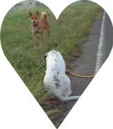 hanna&otherdog1