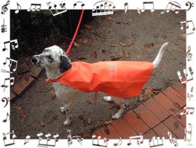 rain coat1-2