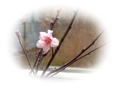 peach2006.03.27