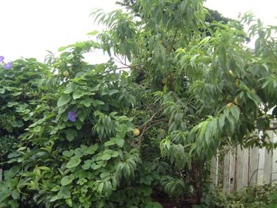 ジャングル?