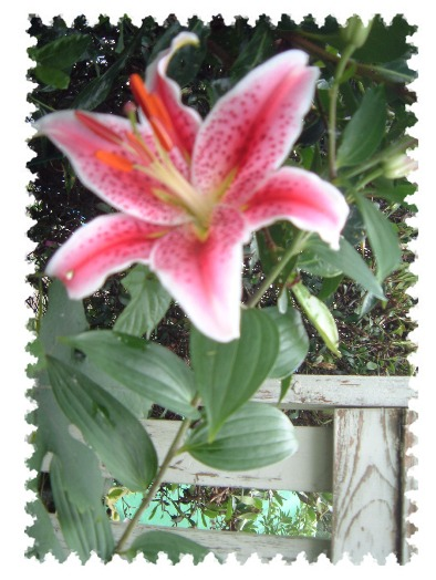 lily0607