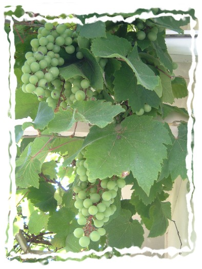 grape060715