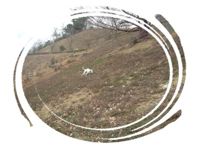 杏奈森林公園3