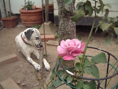 hanna&rose01