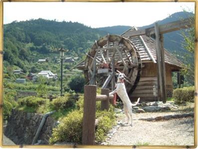 農村公園水車小屋