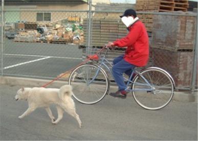 自転車散歩エル