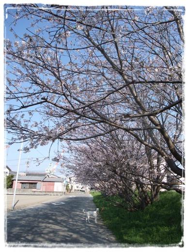 桜と杏奈(小さい)