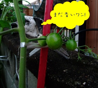 トマトと杏奈