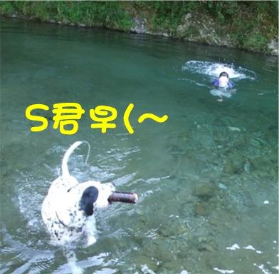 S君とふじ吉君競泳?