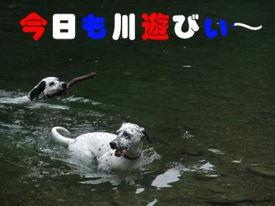 今日も川遊び