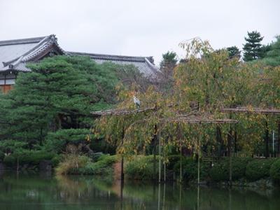 平安神宮のお庭2