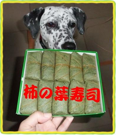 柿の葉寿司と杏奈
