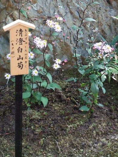 blog_11010012