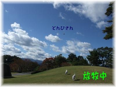 blog11030038