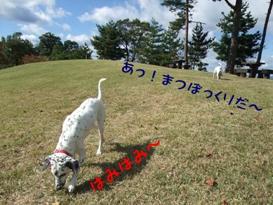 blog_11030042