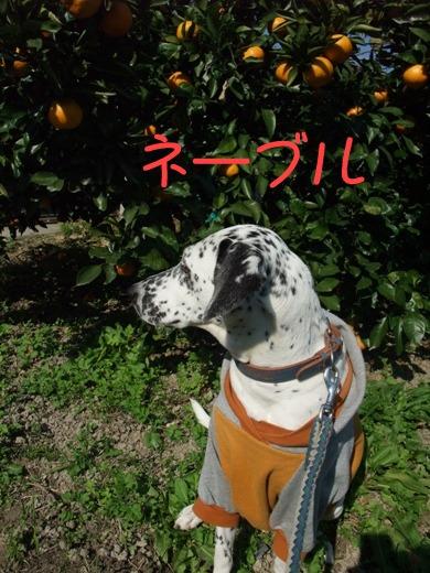 blog_11080014