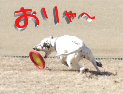 blog_02070052