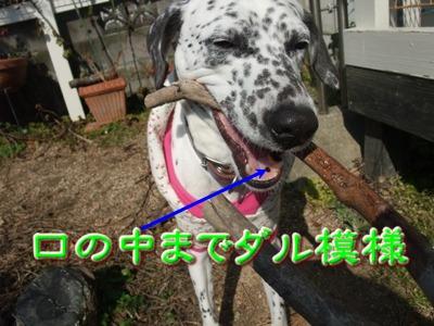 2010_02210003