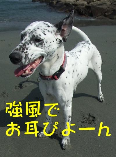 blog03200031