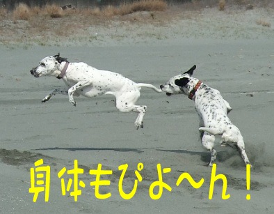 blog_03200009