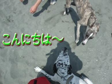 blog2010_04110018