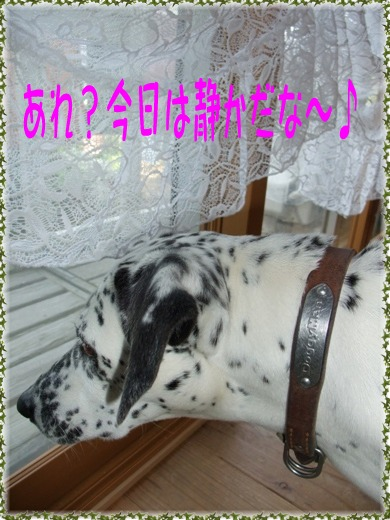 blpg2010_05030018