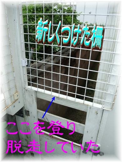 blog2010_06130021