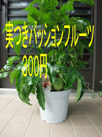 2010_07110002
