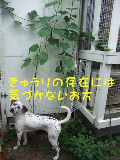 blog2010_07110059