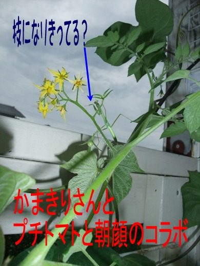 2010_07110054