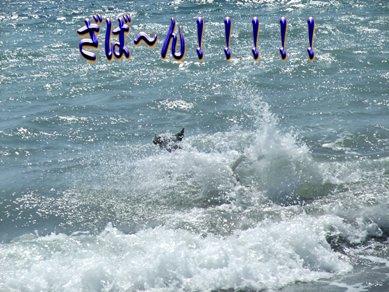 blog2010_07170042
