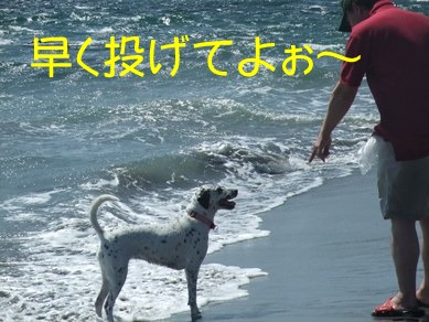 blog2010_07170072
