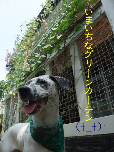 blog2010_08220092